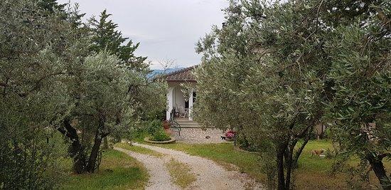 Bilde fra Antico Frantoio Petesse