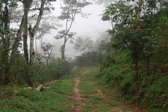 Cafe La Fortuna: A perspective from the top of the mountain at Finca La Fortuna