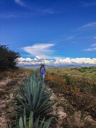 Southern Traveler: Discover the different mezcal making agave of the region, and partake in the making process.