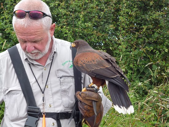 Battlefield Falconry Centre: Mark the owner with one of his hawks