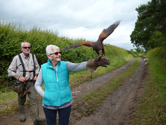 Battlefield Falconry Centre: My wife with the hawk landing