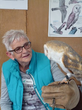 Battlefield Falconry Centre: In the classroom with the barn owl