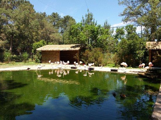 Bilde fra Zoo de Labenne