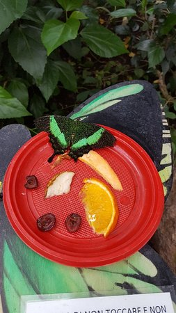 Butterfly House Sardegna: Magnifique!