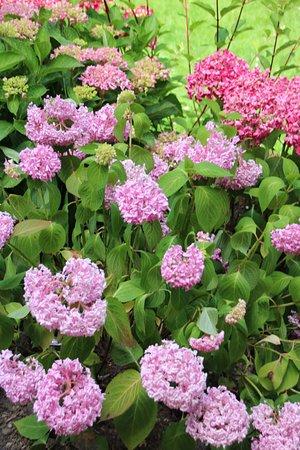 Cazaudehore: le par fleuri