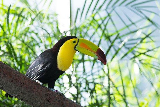 Loveland Living Planet Aquarium: Keel-billed toucan