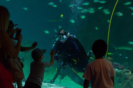 Loveland Living Planet Aquarium: Shark tank diver talk