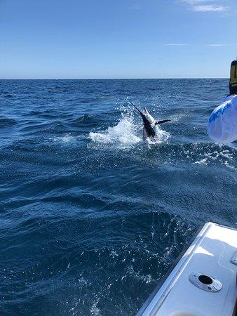 Cabo Fishing Charters Foto