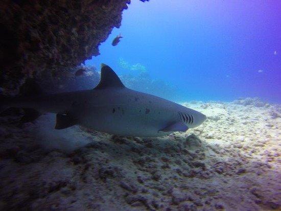 Hawaii Adventure Diving Three Sharks Swimming Right Below Us