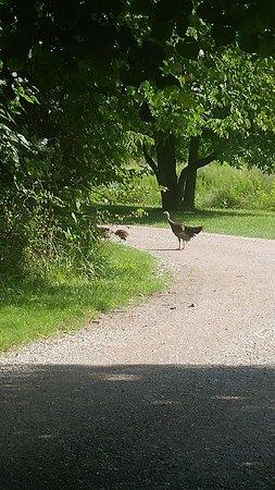 Chapel Hill, TN: Henry Horton State Park
