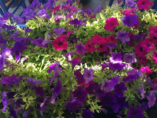 Ilios Hotel & Restaurant: Flowers!