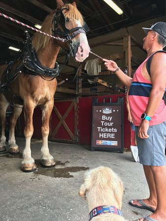 Charleston's Historic Residential Carriage Tour: Rocky The Horse