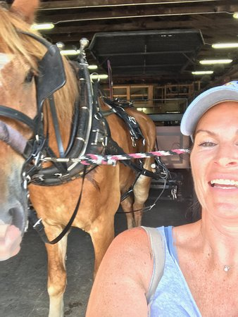 Charleston's Historic Residential Carriage Tour: Rocky and I