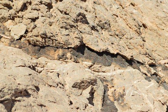 Chak Chak, Iran: Un dettaglio del muschio che resiste nella roccia arida