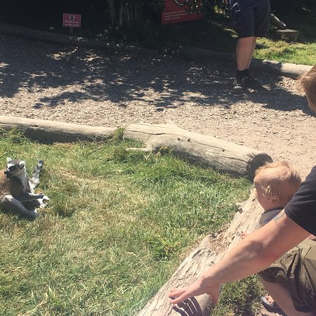 Twycross Zoo: photo4.jpg