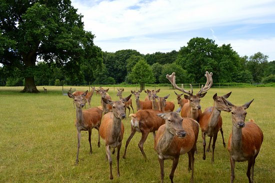 Roarr! Dinosaur Adventure: Deer Safari