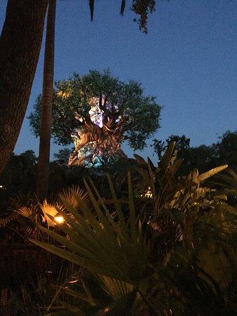 Tree of Life: Árbol de la vida visto de noche