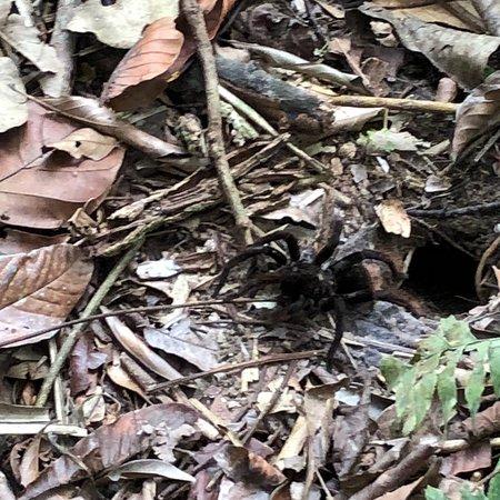 Bilde fra Inkaterra Reserva Amazonica Excursions