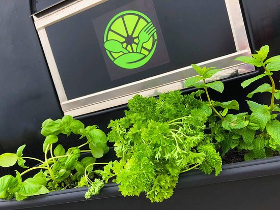 The Lime Kitchen: Our Herb Garden