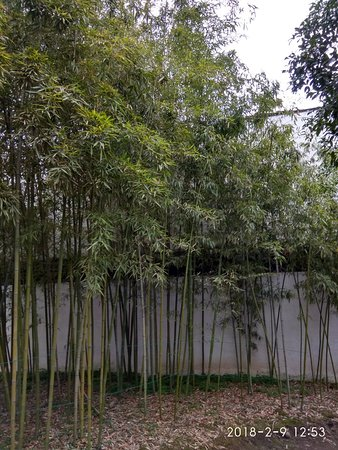 Shaoxing, China: IMG_20180209_125333_HDR_large.jpg