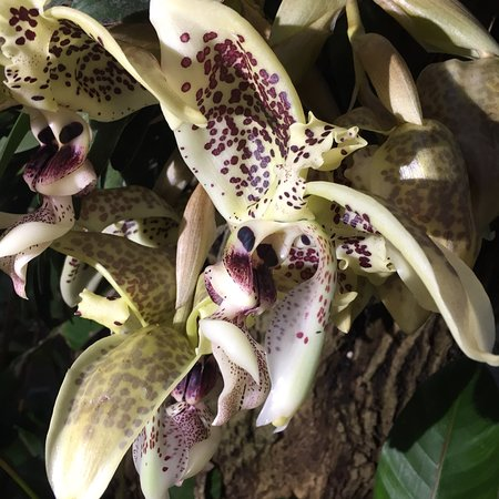 Monteverde Orchid Garden: photo0.jpg