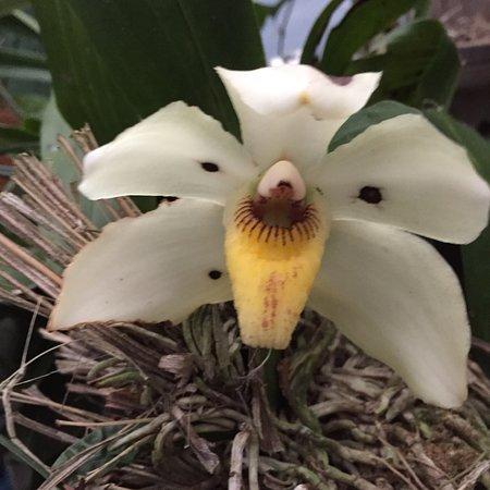 Monteverde Orchid Garden: photo2.jpg