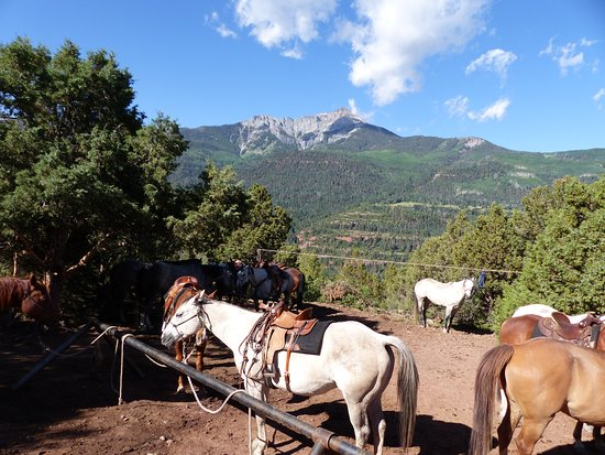 Buckaroo Trail Ride - 2 Hours: Well maintained horses