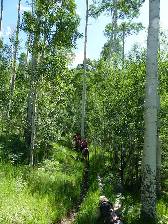 Buckaroo Trail Ride - 2 Hours: Headed through aspens, absolutely wonderful