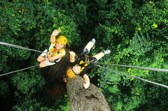 Rain Forest Canopy Zipline Adventure...
