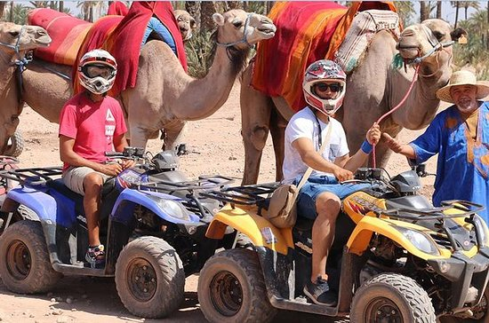 Half Day Camel Ride and Quad Bike in...