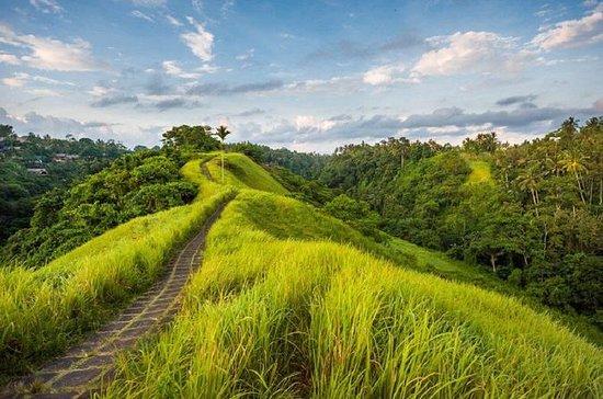 Kintamani Volcano Day-Tours og Bali...