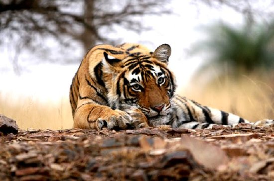 Ranthambore Wildlife Safari Tour with...