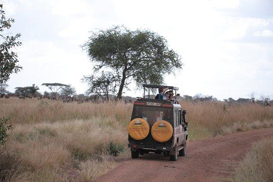 Furahia Tanzania Safari & Trekking Ltd: 在塞伦盖蒂safari