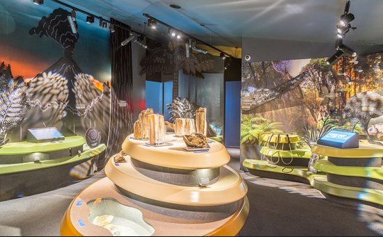 Curio Bay, New Zealand: The Interactive Museum has plenty to see, do, read, watch and listen.