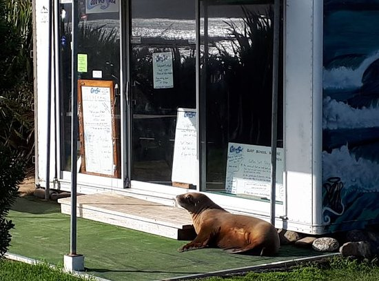 Waikawa, Nueva Zelanda: A sealion taking a sunny break