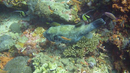 Scuba Diving in Nusa Penida - Manta Point: Chrystal Bay