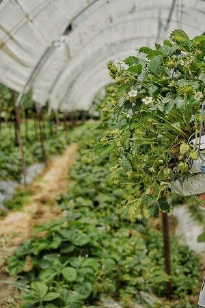 Pension Tannenhof: Garten