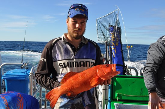 Pelican Charters: abrolhos trout