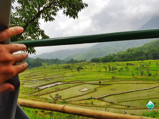 """Kohima District, India: Just Around the Flap"""" - Open your tent flap at Camp Yedhika to be treated to the paddy fields."""
