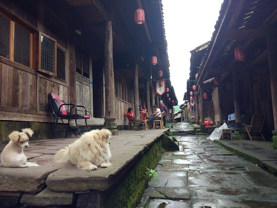 Ya'an, China: Some of the local pets and people