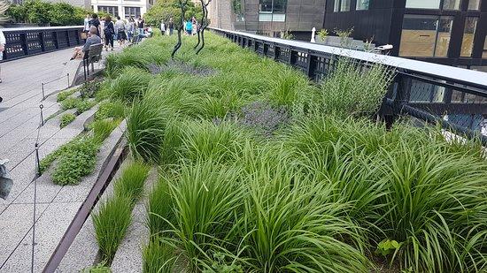 Парк Хай-Лайн: Stå og grønt blant togskinnene