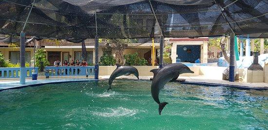 Melka Excelsior Dolphin & Wildlife Resort 사진