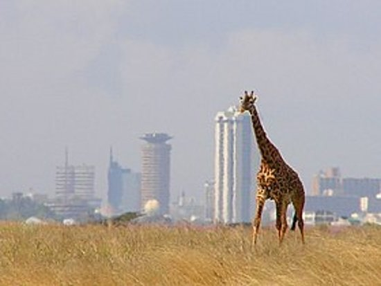 Nairobi Airport Transfer and Tours: Nairobi National Park tour offered daily