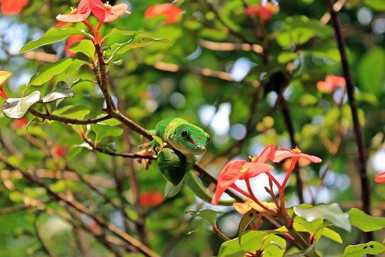 Zoo Zurich: day gecko