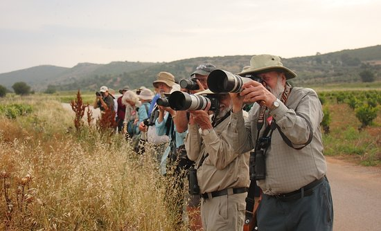 Greece Bird Tours: photographing birds at Spata fields