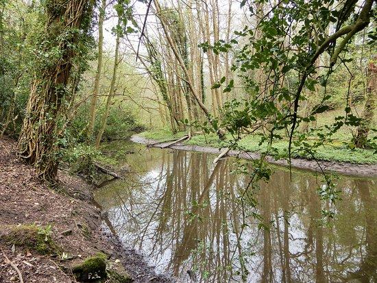 Brotherton Nature Park