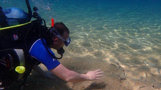 Ocean Diving Center: exploring the marine life