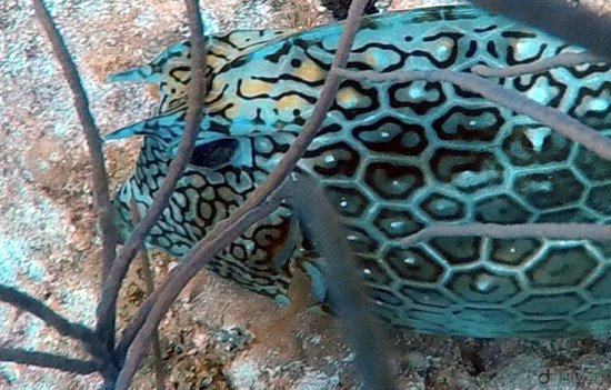 Rainbow Reef Dive Center: Beautiful, and not sure what this guy is.