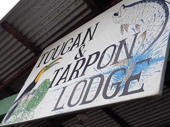 Toucan & Tarpon Photo