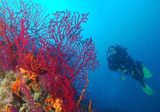 Korfez Diving Center: Mercan